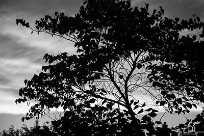 227/365 - Silhouette