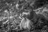 268/365 - Squirrel