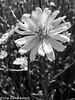 169/365 - Flowers