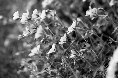 222/365 - Flowers