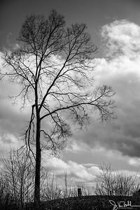 92/365 - Tree
