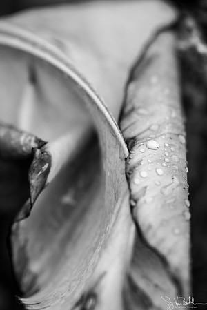224/365 - Leaves