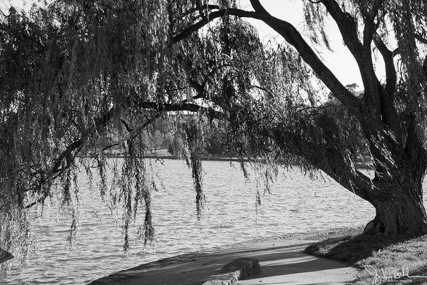 122/365 - Lake Griffin