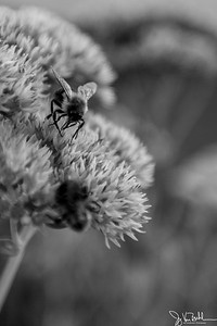 256/365 - Bees