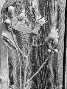 230/365 - Weeds