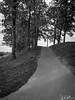 292/365 - Pathway