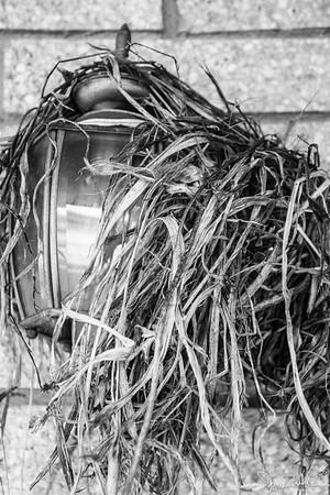 111/365 - Bird nest