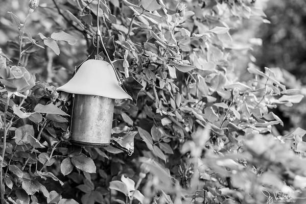 149/365 - Rose bushes and birdfeeder