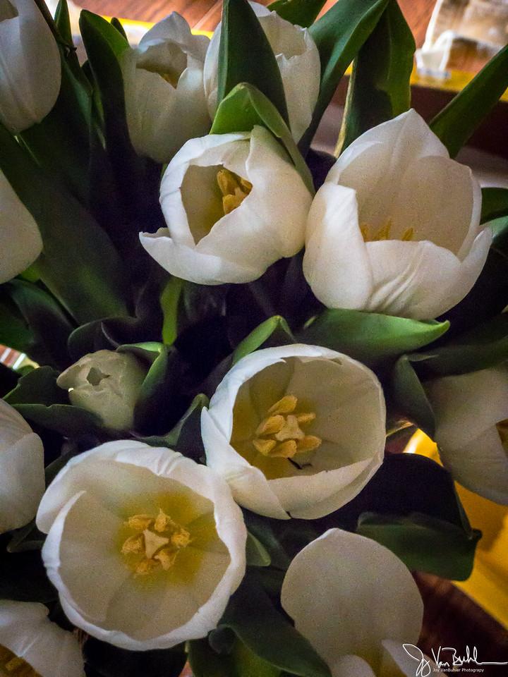 106/365 - Flowers
