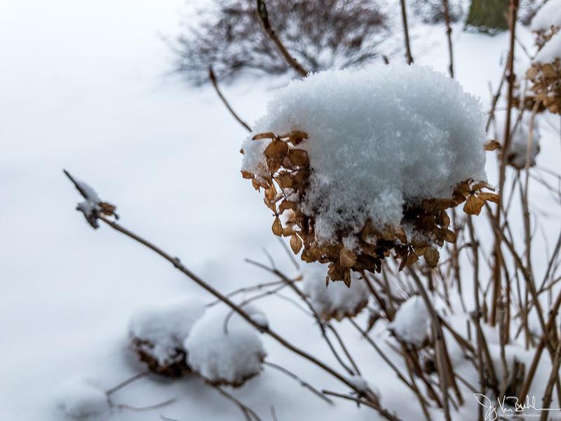 31/365 - Snow