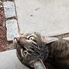 89/365 - Cat