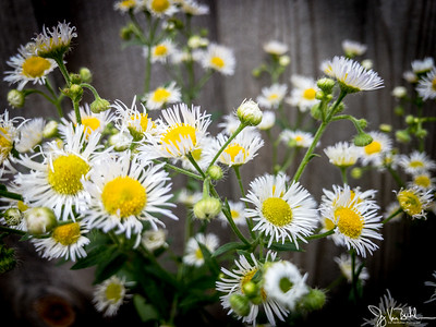 182/365 - Flowers