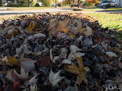314/365 - Raking Leaves