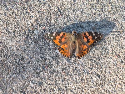 282/365 - Moth