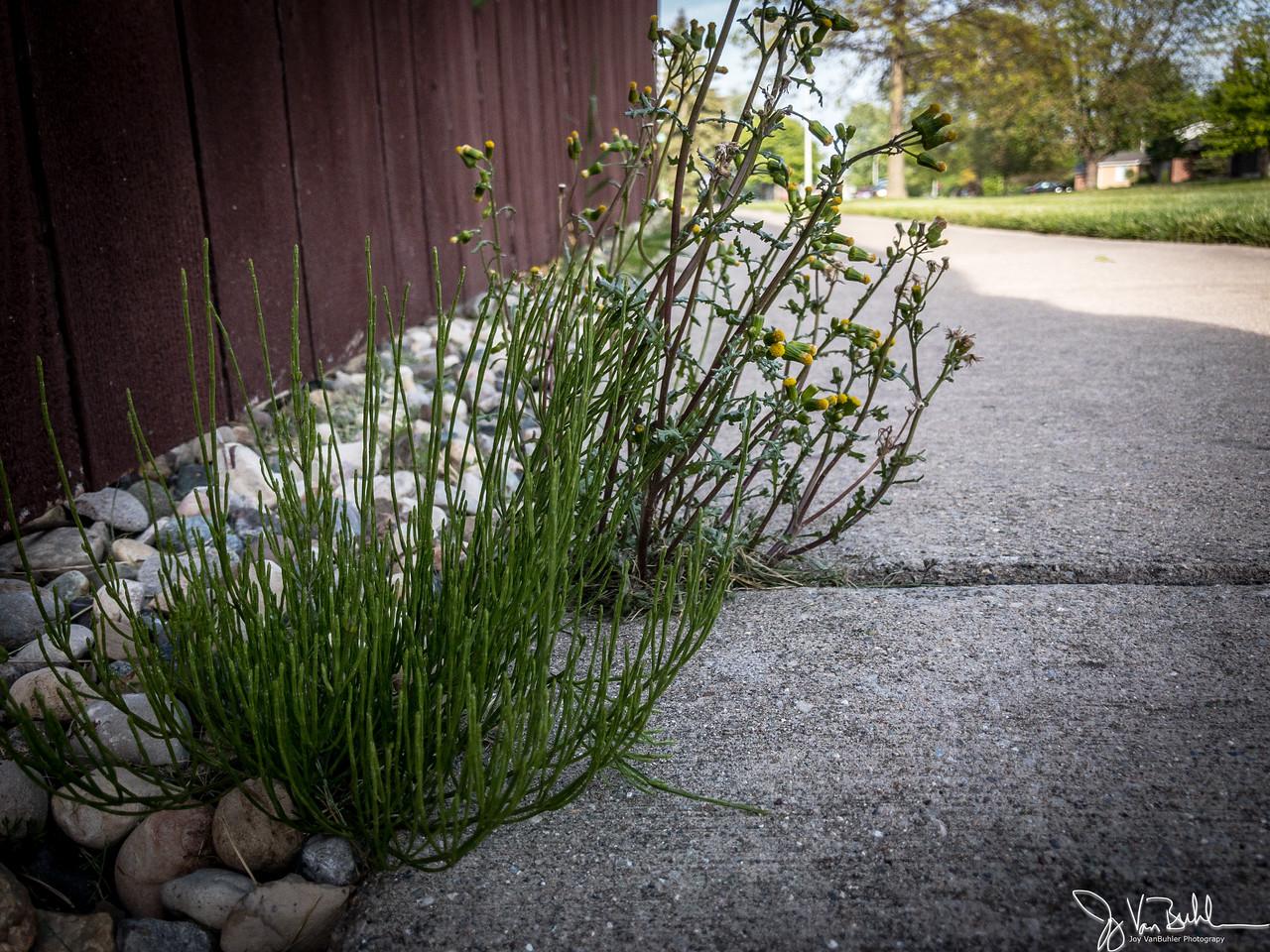 136/365 - Weeds