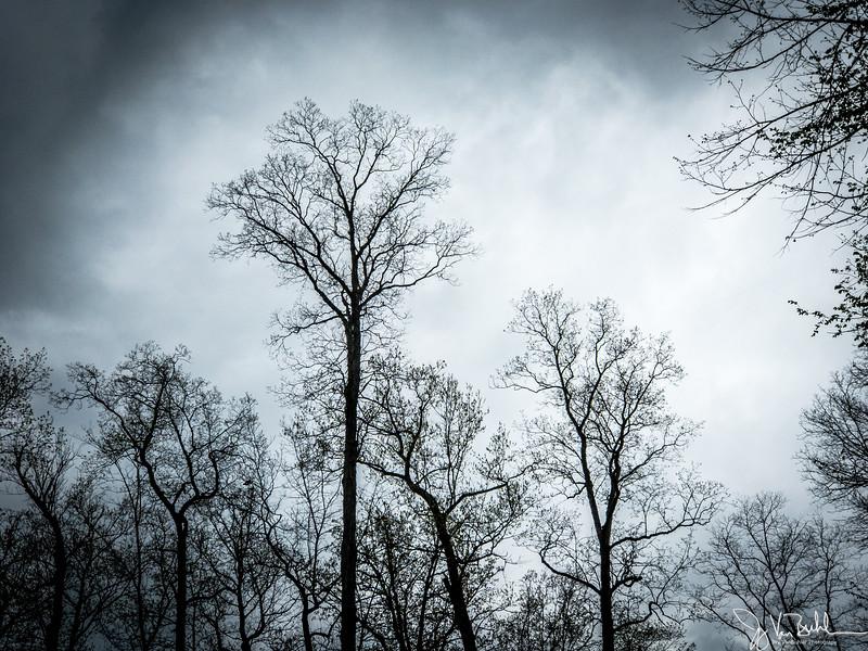 121/365 - Trees