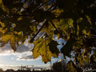 326/365 - Leaves