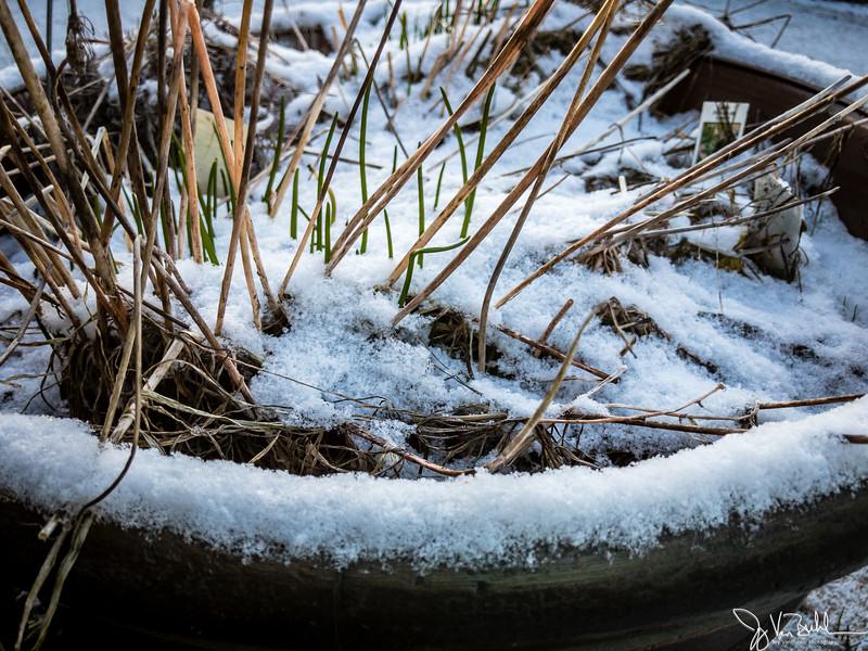 62/365 - Snow