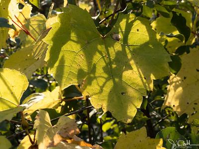 293/365 - Leaves