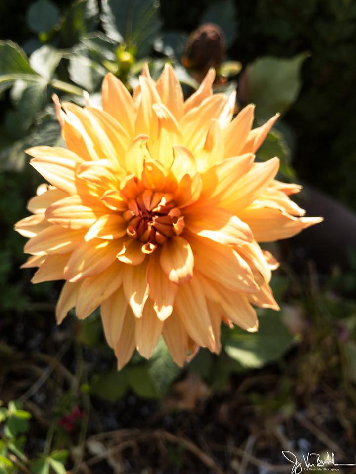 185/365 - Flower