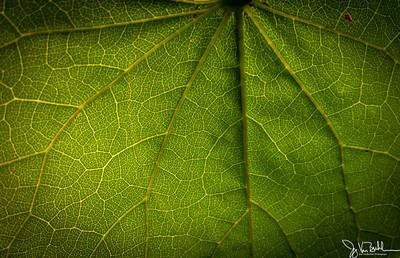 201/365 - Leaf