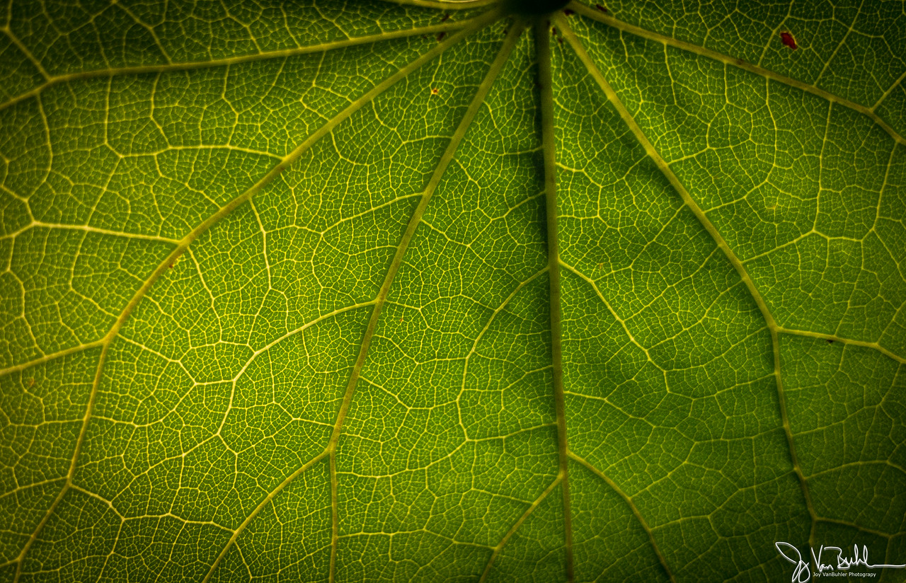 193/365 - Leaf