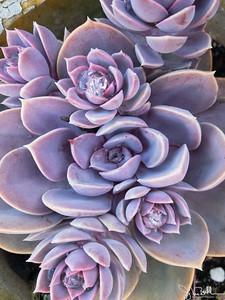286/365 - Succulents