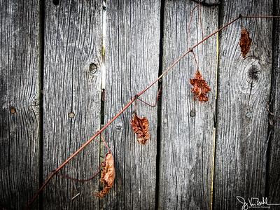 48/365 - Fence