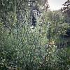 208/365 - Weeds