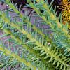 162/365 - Succulent