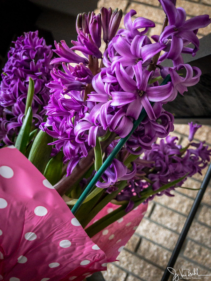 108/365 - Flowers
