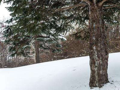 350/365 - Snow