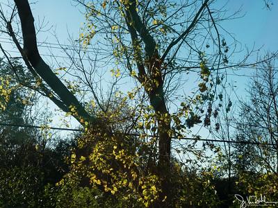 290/365 - Trees