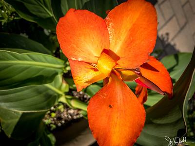 158/365 - Flowers