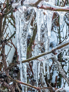 32/365 - Icicles