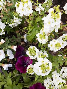 178/365 - Flowers