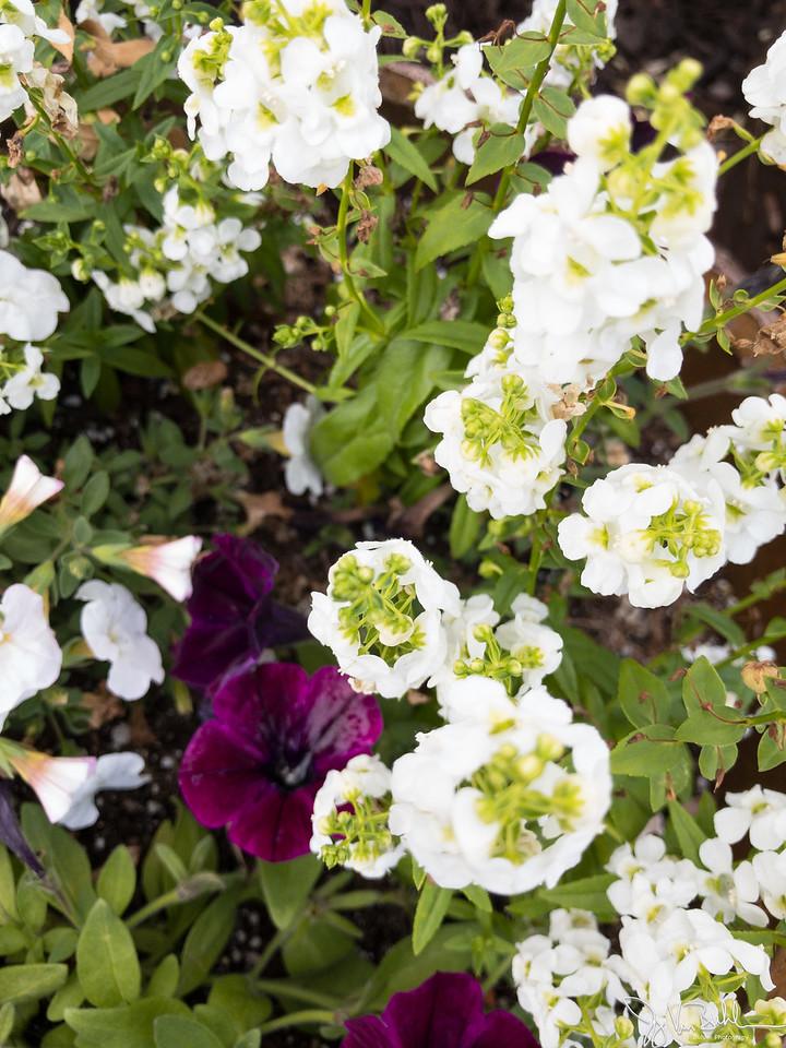 170/365 - Flowers