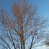 86/365 - Blue Sky