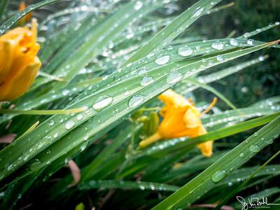 179/365 - Raindrops