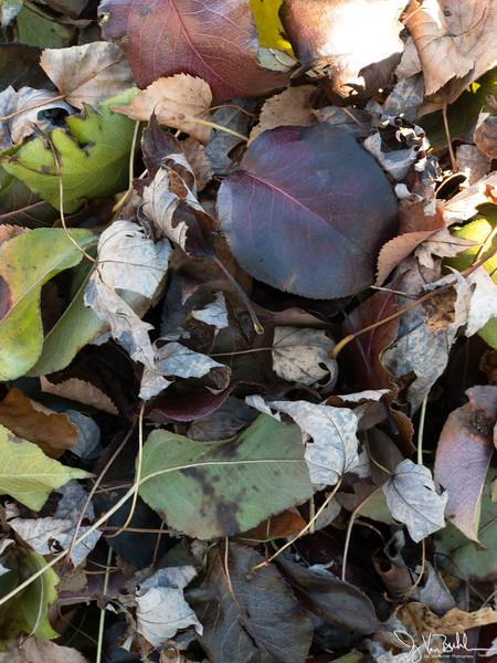 330/365 - Leaves