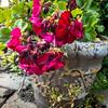 229/365 - Flower Pot