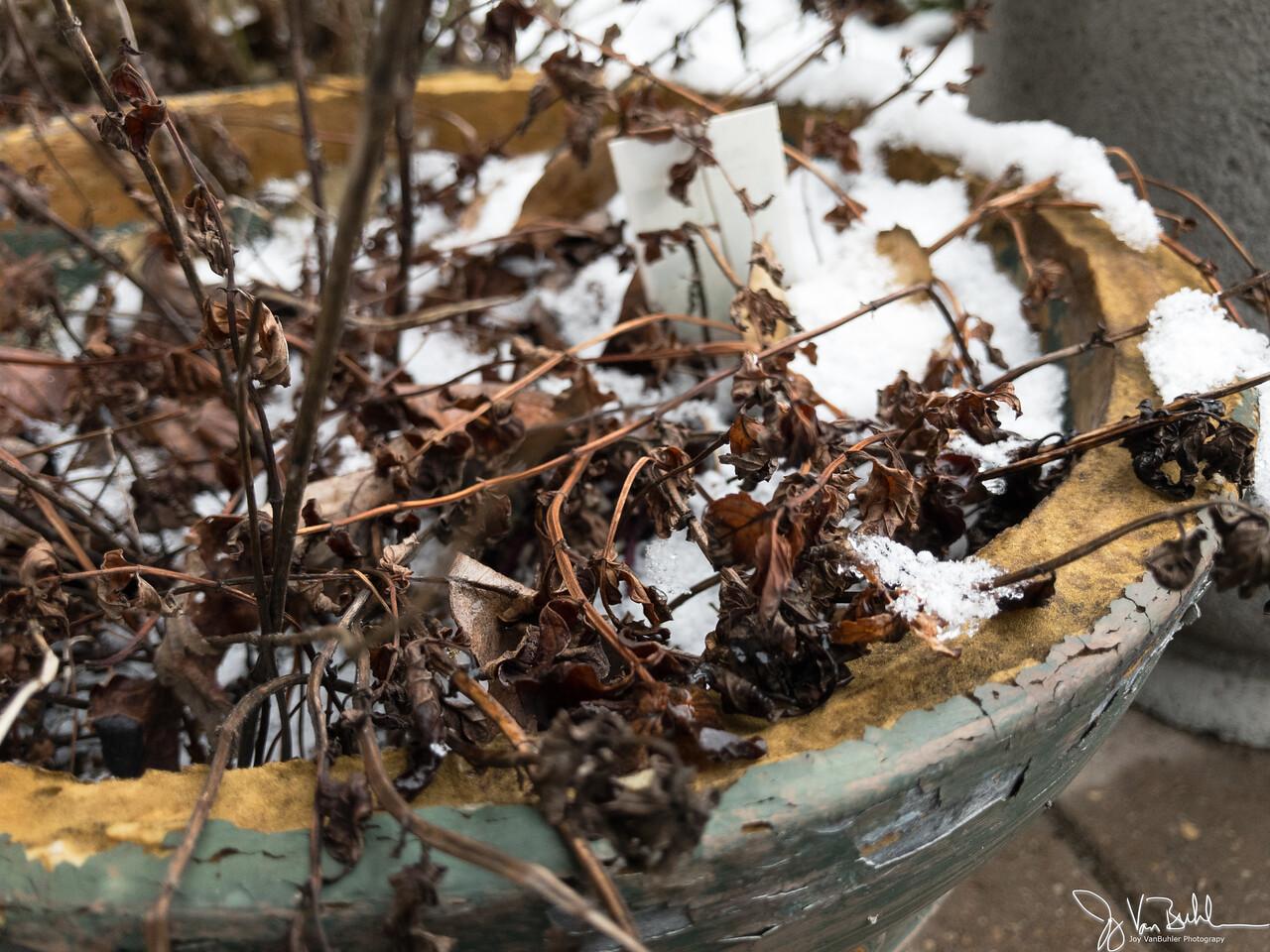29/365 - Winter Flower Pot