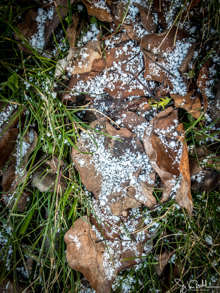 61/365 - Snow