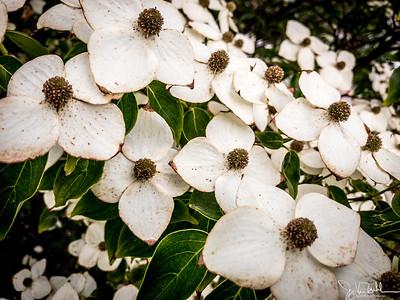 175/365 - Flowers