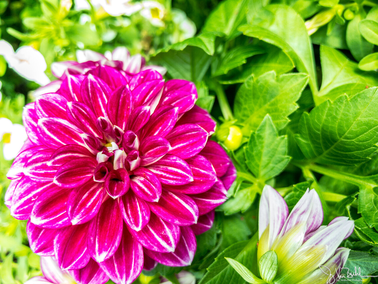 149/365 - Flowers