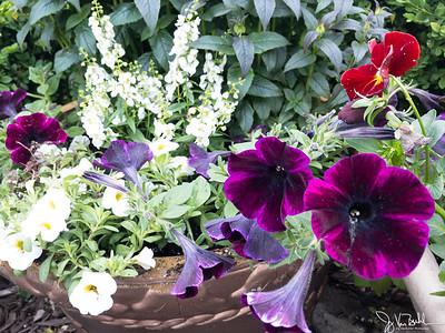 154/365 - Flowers
