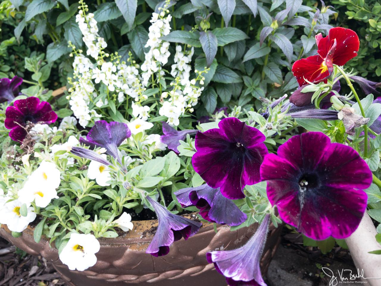 146/365 - Flowers
