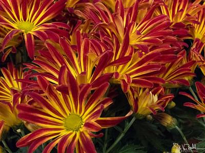 315/365 - Flowers