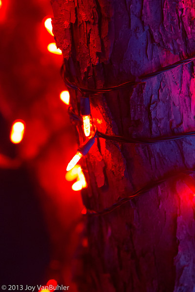 49/52-2: Wild Lights at the Detroit Zoo