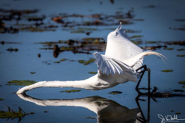 16/52-2: Egret